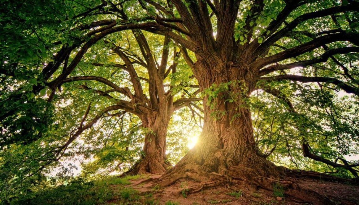 zagrli drvo